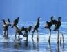 9999lago-di-vico-cormorani