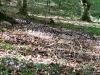 9999lago-di-vico-2011-03-settembre-sentiero