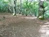 9999lago-di-vico-2011-03-settembre-sentiero--
